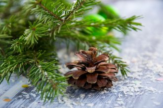 branch-christmas-close-up-753728